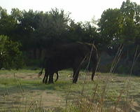 An elephant spotted during our safari